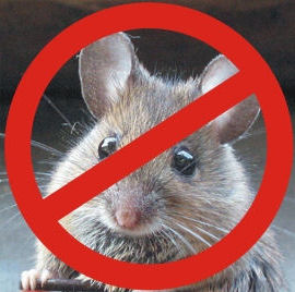 Mouse and rat control solutions in Oakville.