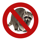 Raccoon removal and control in Oakville.