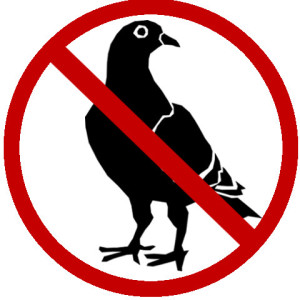 Bird control and removal in Oakville.